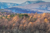 Transition into Winter (jasohill) Tags: autumn october color nature mountains iwate red trees 2017 hachimantai forest photography life colors fall colorful landscape japan golden