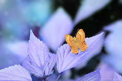 Untitled (Suresh V Raja) Tags: butterfly nature leaf forest nikon suresh chennai tamilnadu india sureshcprog sureshphotography d5300 yercaud salem
