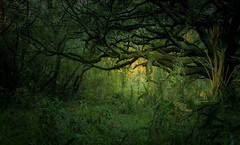 Shaft of Light in the Emerald Forest (JDS Fine Art Photography) Tags: beauty inspirational nature naturesbeauty naturalbeauty spiritual sunset light shaftoflight illumination green emerald dream