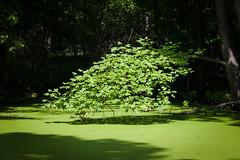 Summer Light (Nikolai Tsyrulnikov) Tags: landscape summer summerlandscape nikon d7000 sigma1750 sigma175028 green forest summerforest nature tree