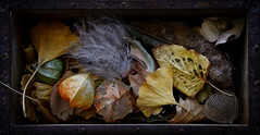 Nature morte (Funchye) Tags: nikon d610 60mm physalis gingko leaves clematis seedhead leaf