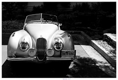 Jaguar XK (Studio d'Xavier) Tags: jaguar jaguarxk car automobile bw elvis theking