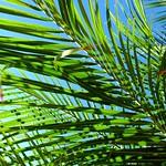 Palm Sunday thumbnail