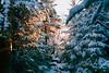 Adirondacks (rsieber82) Tags: kodak film 35mm portra400 f3hp f3 adirondacks newyork algonquinpeak wilderness snow winter outdoors nature rogersieber analog analogue