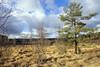 DSC01731 (Tim Philtjens) Tags: heathland heath pines pinetree spar birch sony ilce7 emount