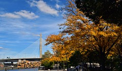 Zakim Bridge in Fall (AntyDiluvian) Tags: boston massachusetts river charlesriver esplanade bridge fall autumn zakimbridge zakimbunkerhillmemorialbridge