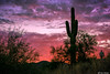 Skyline Regional Park, Buckeye, Arizona (Ken Mickel) Tags: arizona buckeye cacti cactus clouds cloudy desert kenmickelphotography landscape landscapedesert outdoors plants saguaro seasons sky skylineregionalpark summer sunsets topaz topazclarity backlighting backlightingphotography backlit backlitphotography nature photography sunset