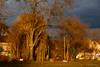 Lumière automnale (Lucille-bs) Tags: europe france bourgogne côtedor ahuy automne lumière arbre nature saule paysage