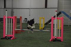 DSC_6616 (jaimekay16) Tags: dog agility k9x k9 xpress leander texas