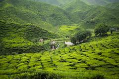 Cameron Highlands (2 of 65) (Muhdarifaiman) Tags: leicam leica malaysia cameronhighland bokeh hobby photography people travel