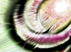 L'appel - The Call (Emmanuelle Baudry - Em'Art) Tags: art artwork abstract artsurreal abstrait artnumérique digitalart space star sf sciencefiction scifi espace espacetemps spiritualité spirituality spacetime spiral spirale étoile blanc black blackhole trounoir couleur colour cosmos cosmic cosmique univers universe lumière light astronomy astronomie dessin drawing dream draw rêve vision vortex