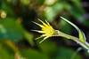 Jackson Hole 1707-1230.jpg (DevonshireMedia) Tags: wyoming jacksonhole travel 2017 grandtetons tetons mountainplants plants flowers