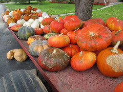 Trailer With Squash, Gourds And Pumpkins. (dccradio) Tags: cavetown smithsburg md maryland produce producestand ag agricultural farm farming agriculture pumpkin pumpkins orange fall autumn harvest longneck squash grass lawn yardgreenery outside outdoors orchard mountainvalleyorchard canon powershot a3400is