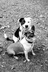 Happy Dogs (Trevor Mott) Tags: dog dogs green black white nature smile grass leaf leaves exciting excitement