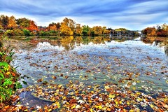 (DeZ - photolores) Tags: royalcitypark guelphcanada water nikon nikond610 nikkor nikkor1424mmf28 nature fall autumn reflection sky hdr dez