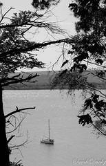 Sail away (sarahdunlop1) Tags: trees boat water frame island brownsea