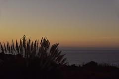 Sonnenaufgang an der Küste von Luz (Lagos); Algarve, Portugal (1) (Chironius) Tags: portugal algarve luz atlantik atlantischerozean atlanticocean morgendämmerung sonnenaufgang morgengrauen утро morgen morning dawn sunrise matin aube mattina alba ochtend dageraad zonsopgang рассвет восходсолнца amanecer morgens dämmerung grasblüte blüte blossom flower fleur flor fiore blüten цветок цветение gras gräser herbe graminées grass grasses erba трава трав commeliniden süsgrasartige poales silhouette himmel sky ciel cielo hemel небо gökyüzü