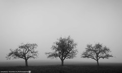 On a foggy morning in October. (andreasheinrich) Tags: landscape field trees fog morning autumn october blackandwhite blackandwhitephotos misty cold germany badenwürttemberg neckarsulm dahenfeld deutschland landschaft feld bäume nebel morgen herbst oktober schwarzweis neblig kalt nikond7000