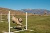 Nickie Agility-11 (pegeshea) Tags: agility nickie