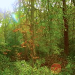 Behind the Forest Trees thumbnail