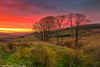 Lighting up (mikeknowles60) Tags: canon650d canon cumbria sunset nenthead aonb mikeknowles trees astoundingimage