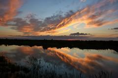 Beautifully Relflected (maritzasoy) Tags: ngc sunsetreflection sunset sunsetcolors louisianasunset lacombe sunsetonthebayou beautifulsky beautifulsunset peace cloudreflection reflections tranquilsunset lovesunset