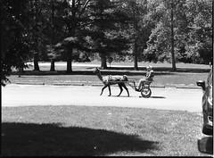 img352 (wolffriend333) Tags: mamiya6451000s 120 rollfilm blackandwhite ilfotecddx homedeveloped tennessee cartllama limestone davycrockettbirthplacestatepark aristaedu
