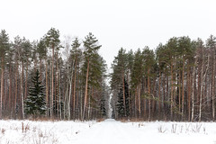 Winter woods (Evgeny Ermakov) Tags: europe european russia beautiful beauty birch cold coldness coniferous countryside day daylight daytime december fir forest frost green hike landscape nature outdoor outdoors pine scenic snow spruce travel tree trees white whitewood winter wood woods