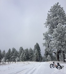 Snow biking is back (Doug Goodenough) Tags: bicycle bike cycle trek farley 5 fat fatbike waha craig mountains december dec 2017 17 snow pedals spokes drg53117 drg53117p