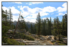 Yosemite National Park - Olmsted Point (Carme Baraut) Tags: natura california usa eua nature califòrnia yosemitenationalpark olmstedpoint