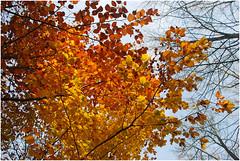 DSC_1865 (FMAG) Tags: 2017 żabieniec zalesie jesien