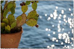 di fichi d'india  e mare  ... (miriam ulivi OFF /ON) Tags: miriamulivi nikond7200 italia sicilia sicily isoleeolie lipari mare sea fichidindia figsofindia bokeh vasoditerracotta terracottapot nature
