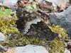 IMG_2681 (FILEminimizer) (bouillons vagabonds) Tags: bosnie lépidoptères rhopalocères