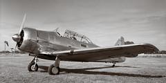 North American SNJ on 8x10 (Wet Possum) Tags: 8x10 airfield airplane bwnegative commercialektar deardorff hp5 northamericanharvardii pyro pyrocathd t6 epsonscan ilford largeformat scan v700