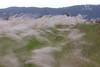 花蓮 壽豐鄉 芒花 (克魯斯忠) Tags: 花蓮旅遊 花蓮景點 花蓮觀光 壽豐鄉 慢速快門 長曝 石頭 風景 大自然 素材庫 素材 植物 綠 hualien 花蓮風景 shoufeng township 木瓜溪 芒花 11月 135l canon 5dil nd1000 減光鏡 芒花季 腳架 快門線 慢快門 花東縱谷 花蓮縣 秋季 秋天 蘆葦