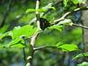 IMG_3112 (FILEminimizer) (bouillons vagabonds) Tags: bosnie lépidoptères rhopalocères