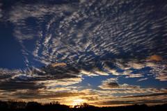 Abendhimmel im November (03) (Rüdiger Stehn) Tags: altenholz altenholzstift 2000er 2000s europa mitteleuropa deutschland norddeutschland germany schleswigholstein canoneos550d 2017 rüdigerstehn himmel wolken abendrot sonnenuntergang