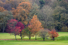 Autumn Brat Pack (Picture South West) Tags: dartmoor national park devon canon 7d trees autumn golf course