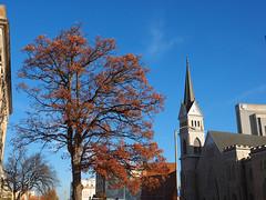 Holy Oak Batman (tripod_treker) Tags: autumn oak tree fallcolor church sky bluesky citystreets buildings clock steeple