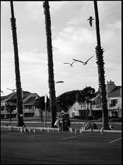 Bird Lady of Port Hueneme (greenschist) Tags: california usa porthueneme zenzanonrf100mmf45 blackwhite bronicarf645 berggerpancro400 analog film