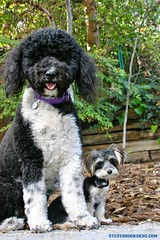 "LITTLEBUDDY&DAISY SBK9U • <a style=""font-size:0.8em;"" href=""http://www.flickr.com/photos/95808399@N03/38811129221/"" target=""_blank"">View on Flickr</a>"