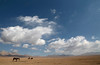 Song Kul Big Sky (peterkelly) Tags: kyrgyzstan songkol songkul digital canon 6d gadventures centralasiaadventurealmatytotashkent asia blue sky clouds horses horse meadow alpine mountains pole rider riding
