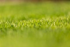 Depth of field (ako_law) Tags: 6d 70200mm canon canonef70200mmf28lisiiusm canoneos6d ef70200mmf28lisiiusm eos6d natur nature pflanze pflanzen plants ranis thuringia thüringen