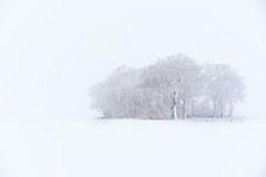 Snowy Copse (elliot.hook) Tags: landscape snow trees copse wodland uk hertfordshire stevenage winter