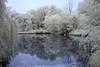 Brookline IR_20170617_035 (falconn67) Tags: brookline massachusetts newengland pond hallspond sanctuary amorywoods swamp cedarswmp infrared canon 7d 24105mml