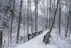 Merry Christmas Eve! (Matt Champlin) Tags: winterwonderland winter snow snowing snowstorm snowy beautiful pure untouched hiking christmas holiday holidays merrychristmas christmaseve quiet calm peace peaceful nature woodland canon 2017