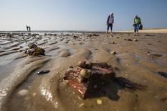 Sylt (karstenniehues) Tags: sylt insel nordfriesland nordsee meer wasser strand schiffe