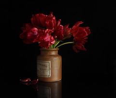 Christmas Tulips (Smiffy'37) Tags: 7dwf flora tulips stilllife red drama blackbackground flowers sundaylights