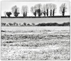 West Rudham long barrow. (AJ Mitchell) Tags: barrow norfolk earthwork ivy neolithic prehistoric prehistory britishisles