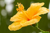 Plantas no Litoral Paranaense 4 (André Thiago Chaves Aguiar) Tags: plantas folhas flor chuva macro litoral nublado cor